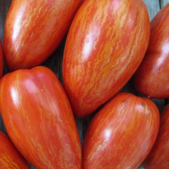 Tomates bigarrées de mi-saison Speckled Roman / Striped Roman
