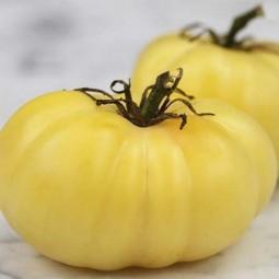 Tomates blanches de mi-saison Grosse Blanche